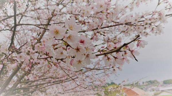 春の訪れ_d0176392_17581272.jpg