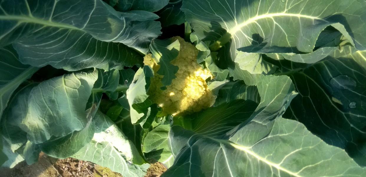 ハウスで生育中の野菜さんたち。_d0026905_09164092.jpg