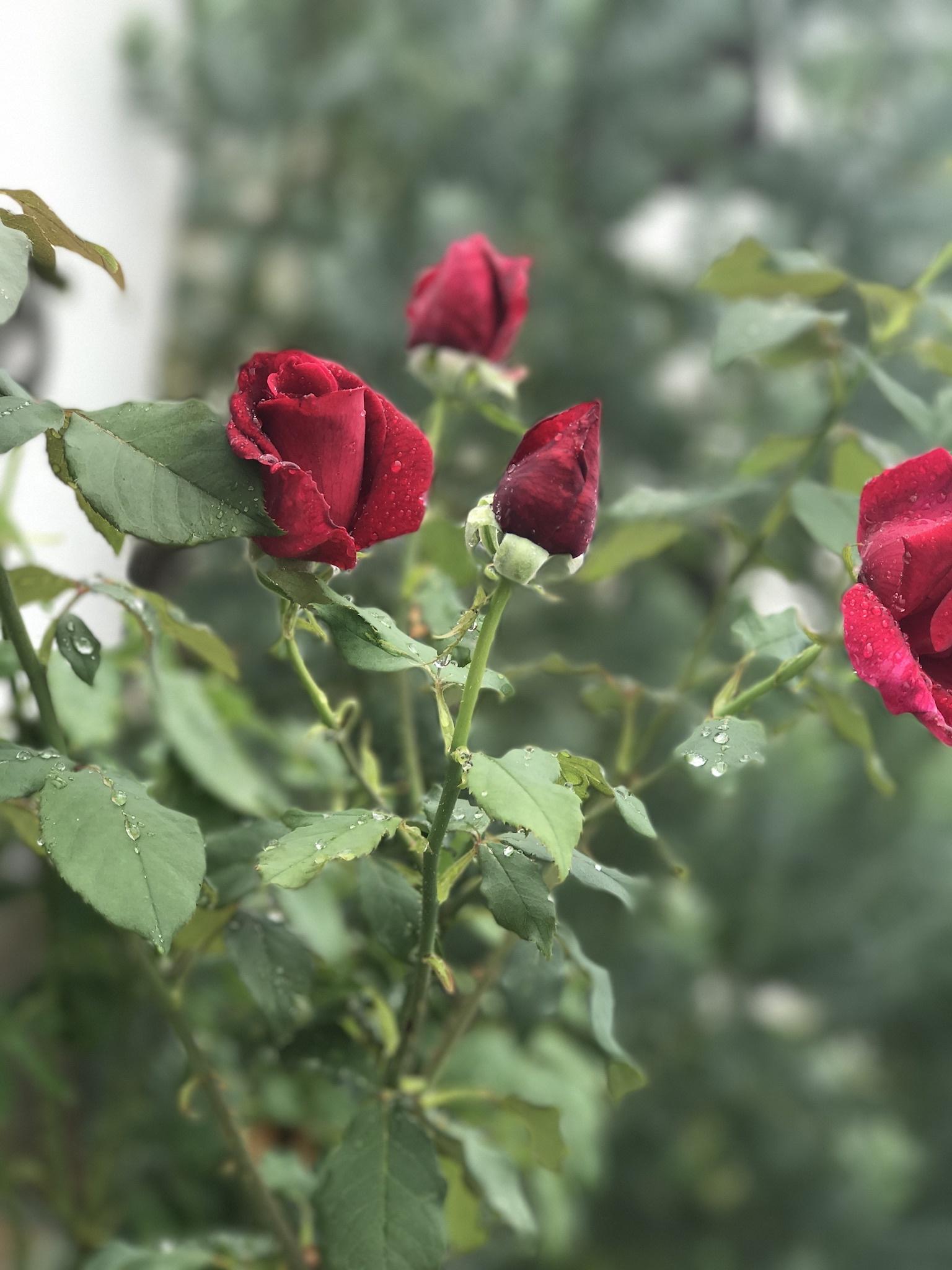 こだわりの花屋さん。_b0389615_02414889.jpeg