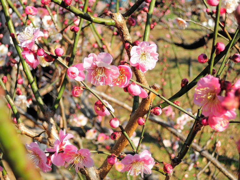 ある風景:Okurayama, Yokohama@2021 Spring #2_d0393923_22220551.jpg