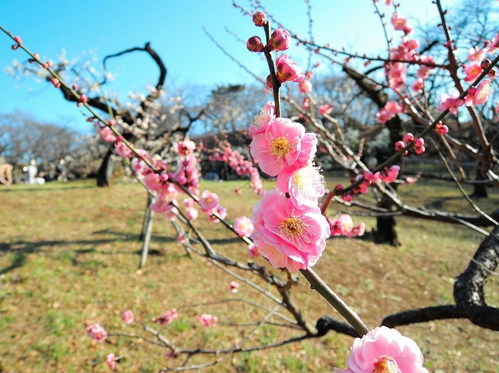 ある風景:Okurayama, Yokohama@2021 Spring #2_d0393923_22220559.jpg