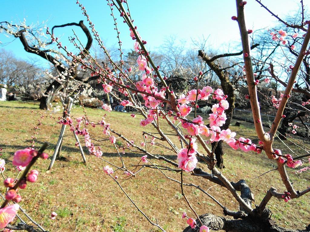 ある風景:Okurayama, Yokohama@2021 Spring #2_d0393923_22220573.jpg