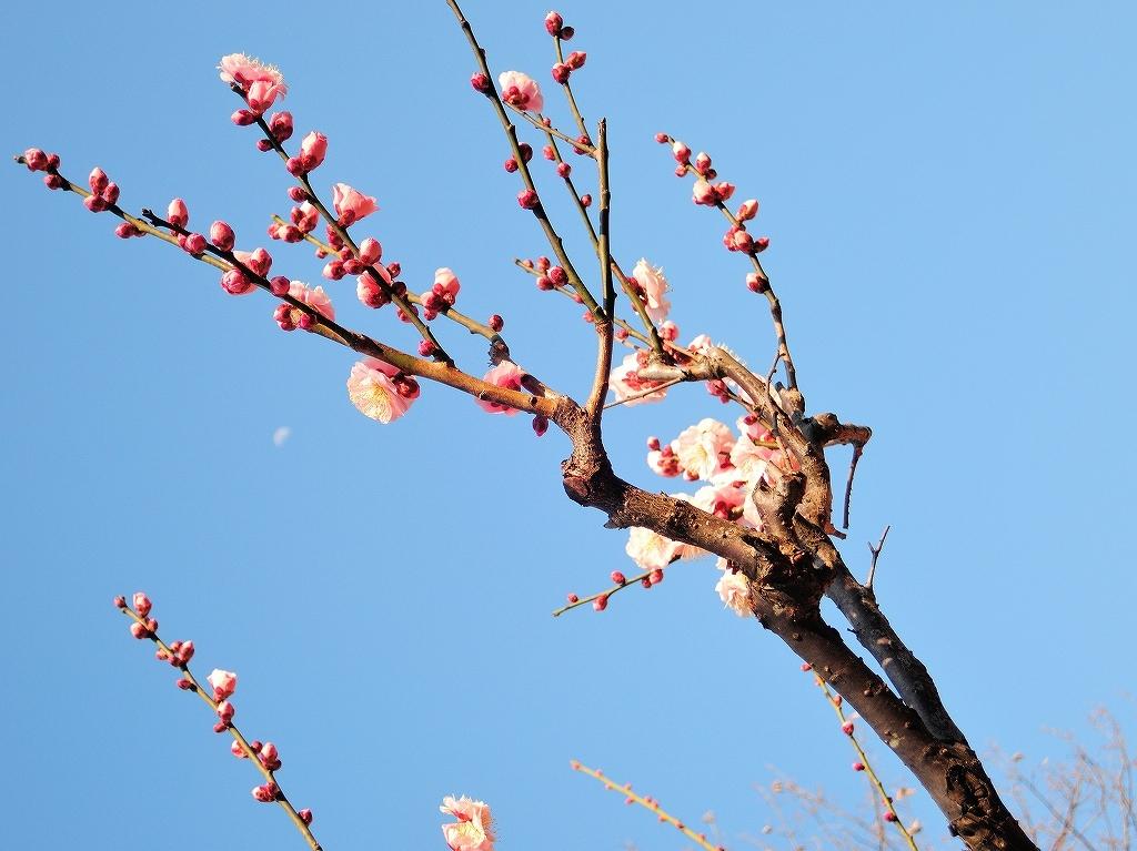 ある風景:Okurayama, Yokohama@2021 Spring #2_d0393923_22220669.jpg