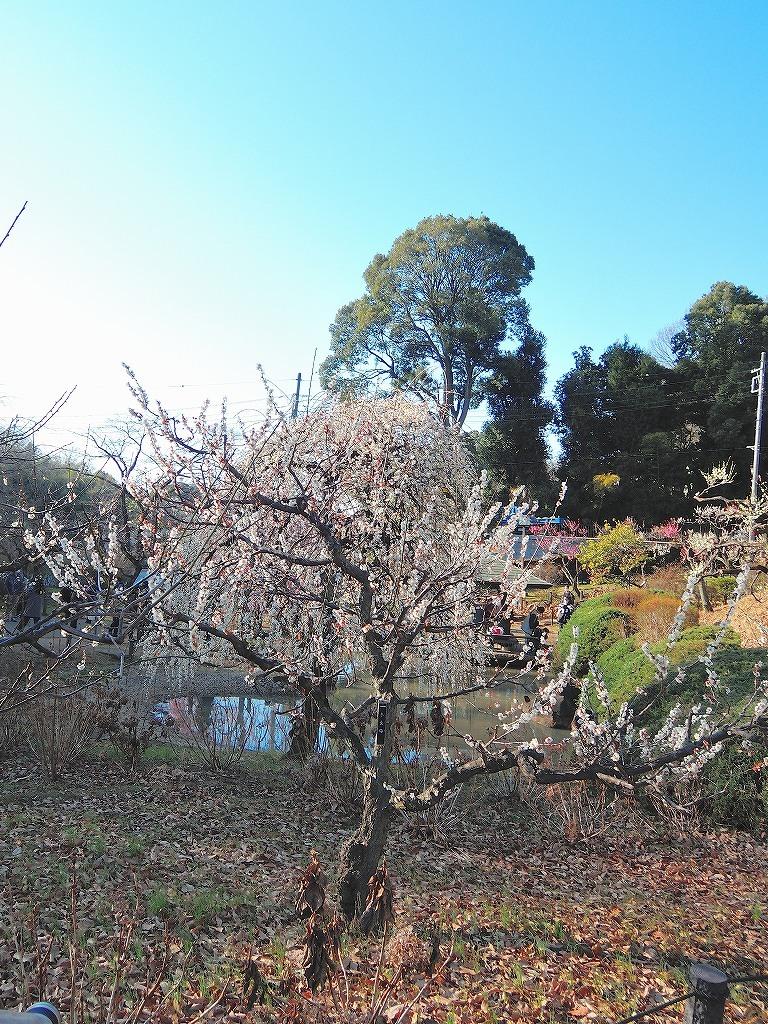 ある風景:Okurayama, Yokohama@2021 Spring #2_d0393923_22220681.jpg