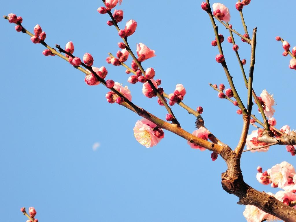ある風景:Okurayama, Yokohama@2021 Spring #2_d0393923_22220682.jpg