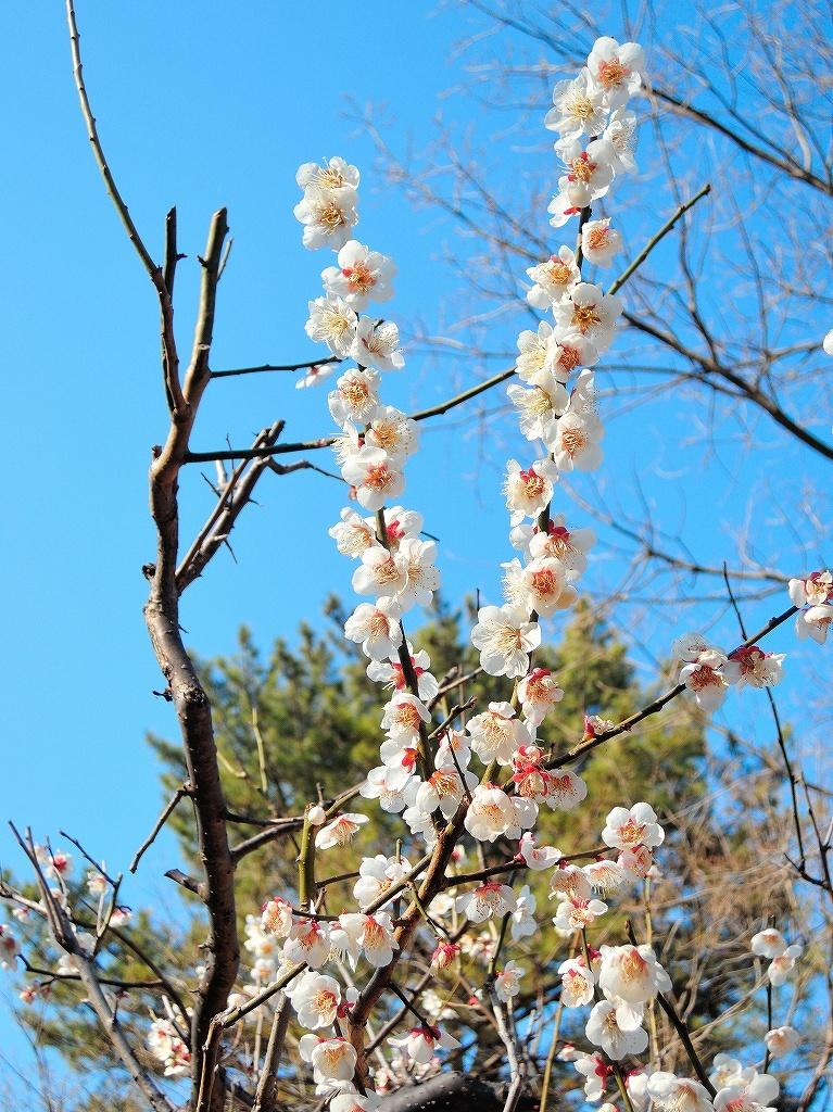ある風景:Okurayama, Yokohama@2021 Spring #2_d0393923_22221853.jpg