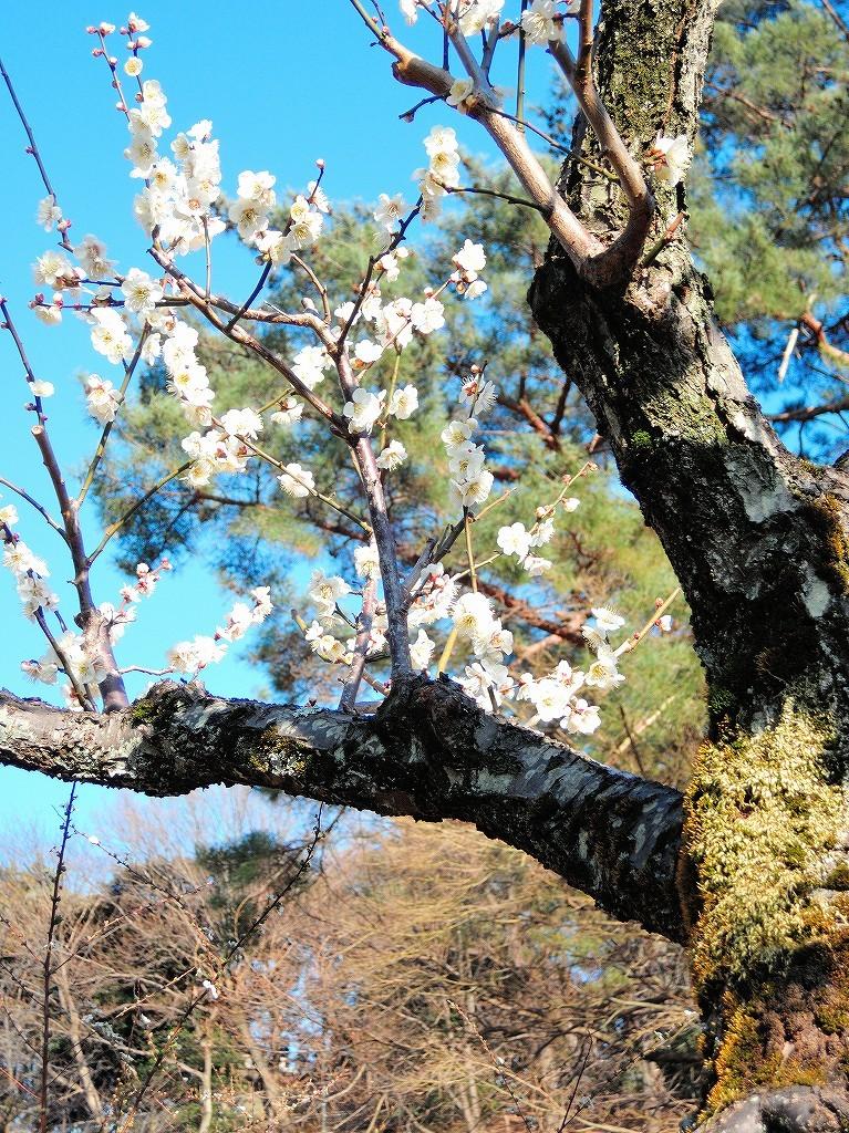 ある風景:Okurayama, Yokohama@2021 Spring #2_d0393923_22221886.jpg