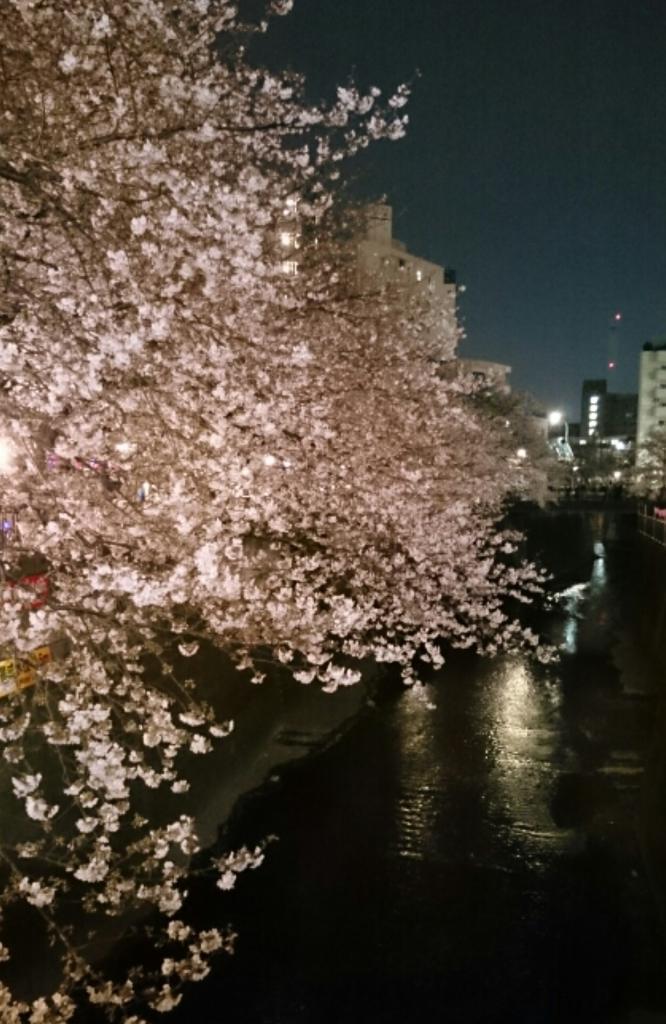桜~早くも満開_d0051146_08280183.jpg