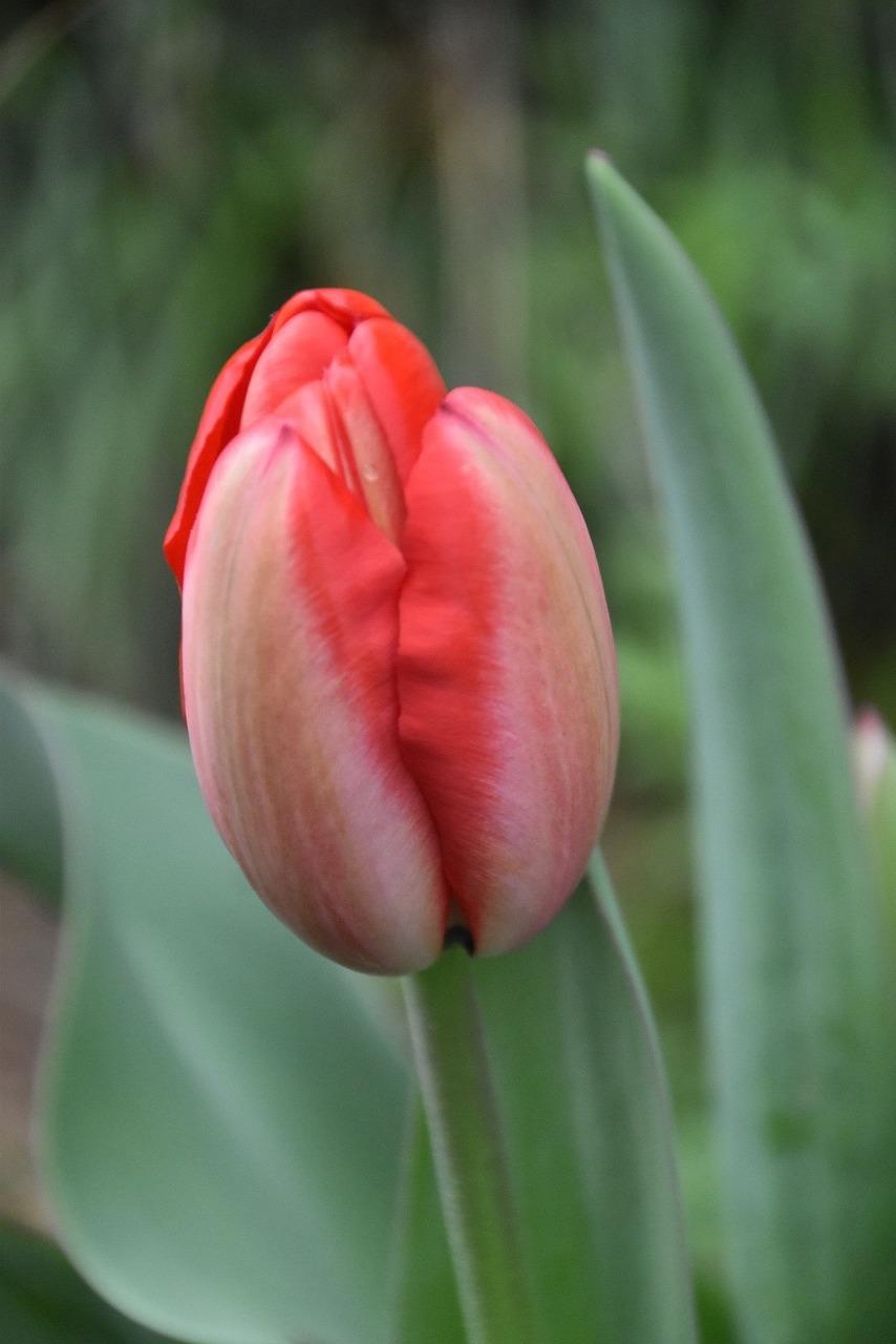 春到来_d0338347_13290017.jpg