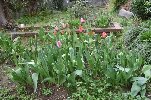 春到来_d0338347_13293832.jpg