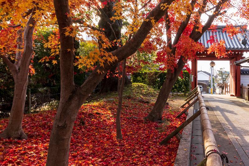 2020紅葉きらめく京都 艶めく参道(乙訓寺)_f0155048_21510104.jpg