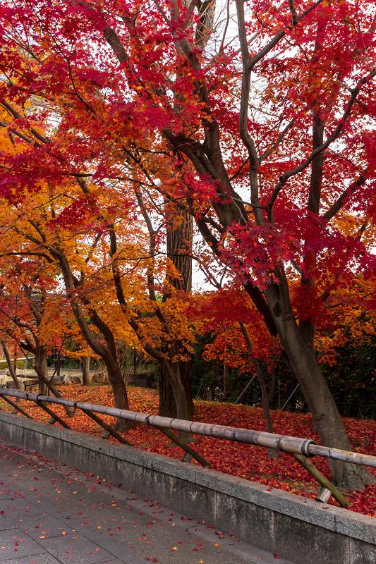 2020紅葉きらめく京都 艶めく参道(乙訓寺)_f0155048_21511421.jpg