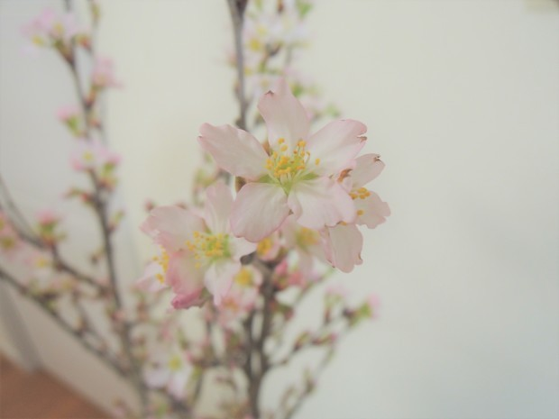 家でお花見_f0365954_18215738.jpg