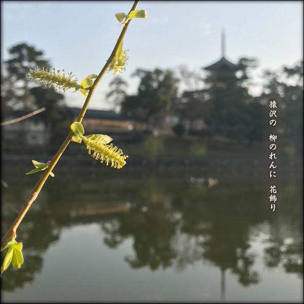 柳のれん_a0197968_12080390.jpg