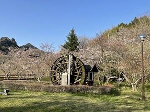 桜の季節_b0334271_20221993.jpg