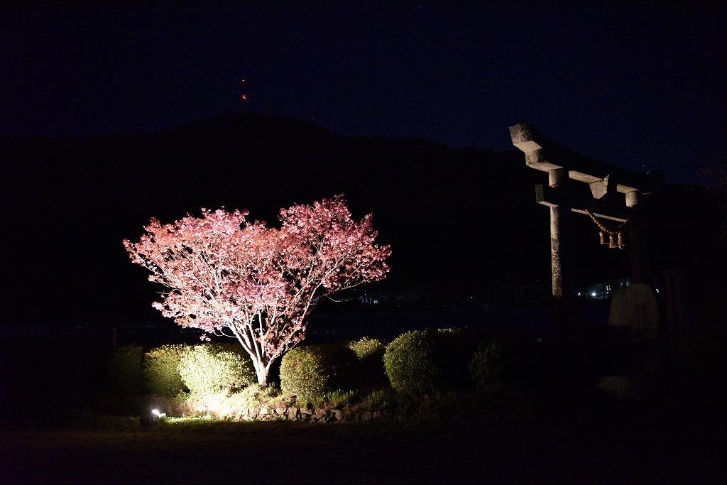 ハート桜2021_e0174477_09084897.jpg