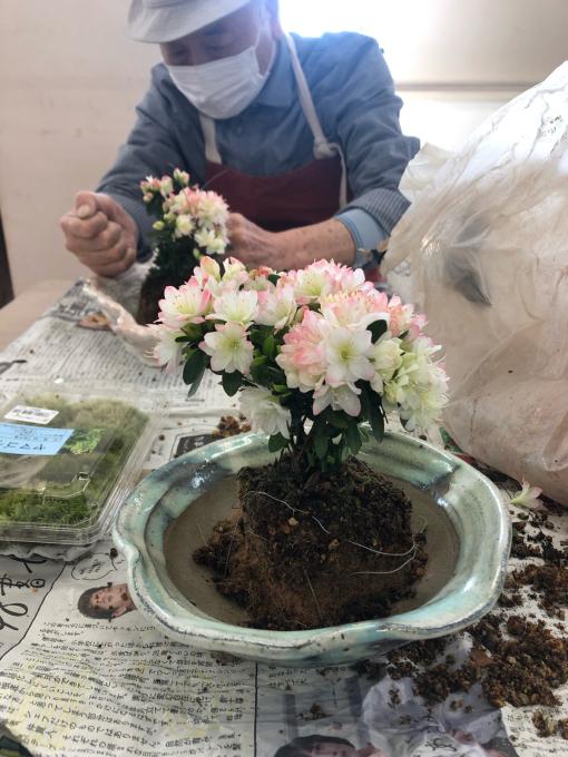 盆栽植え付け_c0298879_23014908.jpg