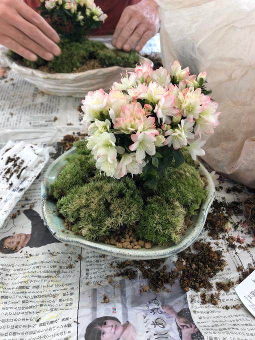 盆栽植え付け_c0298879_23023280.jpg