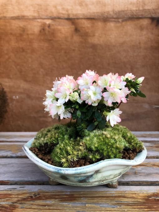盆栽植え付け_c0298879_23025639.jpg