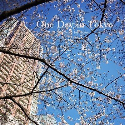青空の下、桜、もっと咲く_f0245680_17470694.jpg