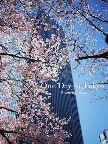 青空の下、桜、もっと咲く_f0245680_17471976.jpg