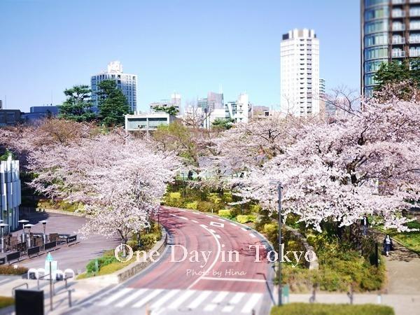 青空の下、桜、もっと咲く_f0245680_17473039.jpg