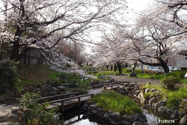 お花見散歩_c0051105_21025390.jpg