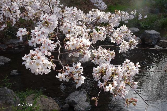 お花見散歩_c0051105_21044279.jpg