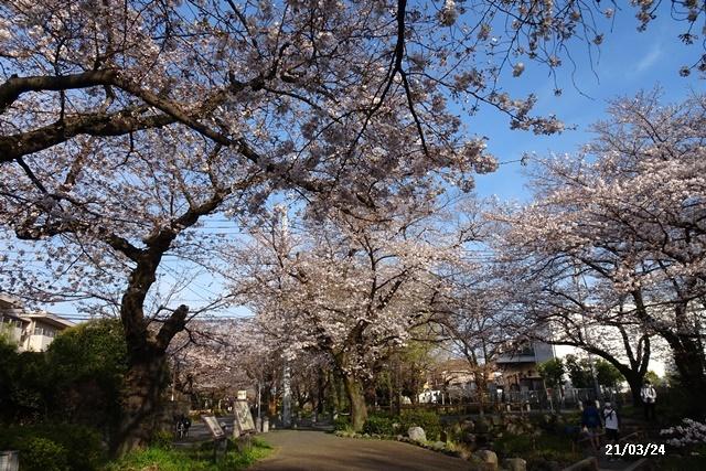 お花見散歩_c0051105_21062932.jpg