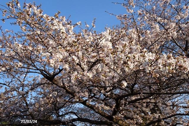 お花見散歩_c0051105_21443569.jpg