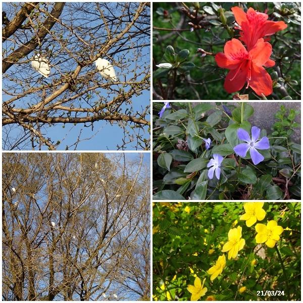 お花見散歩_c0051105_21573240.jpg