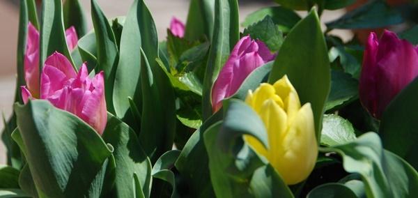 お花見散歩_c0051105_22371874.jpg