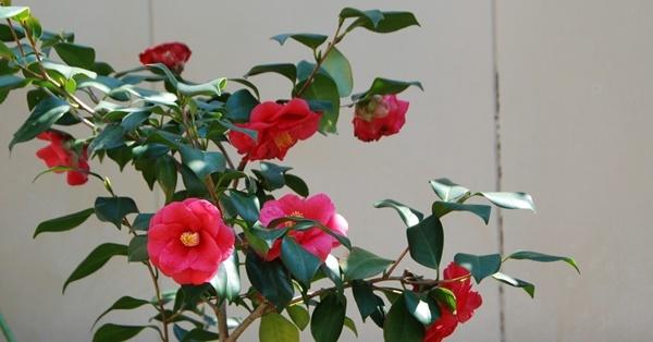 お花見散歩_c0051105_22380765.jpg