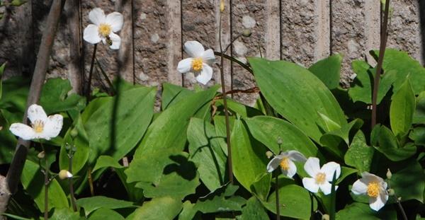 お花見散歩_c0051105_22383388.jpg