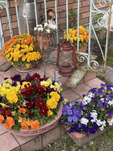 春爛漫のお庭*⃝̣◌︎⑅⃝︎◍︎♡︎◌︎*⃝̥◍︎♡︎_a0213806_12283934.jpeg