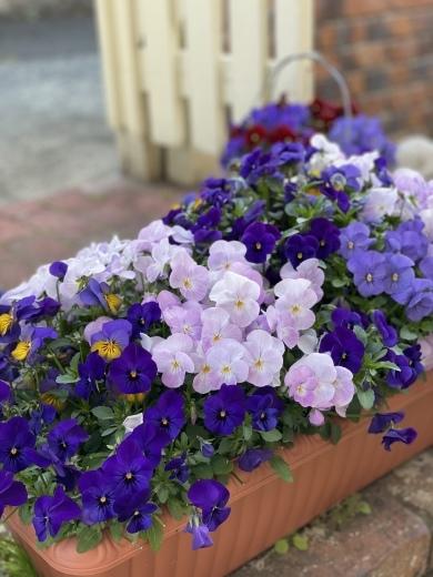 春爛漫のお庭*⃝̣◌︎⑅⃝︎◍︎♡︎◌︎*⃝̥◍︎♡︎_a0213806_12293894.jpeg
