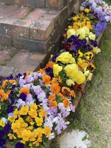 春爛漫のお庭*⃝̣◌︎⑅⃝︎◍︎♡︎◌︎*⃝̥◍︎♡︎_a0213806_12295259.jpeg