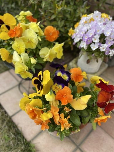 春爛漫のお庭*⃝̣◌︎⑅⃝︎◍︎♡︎◌︎*⃝̥◍︎♡︎_a0213806_12301055.jpeg