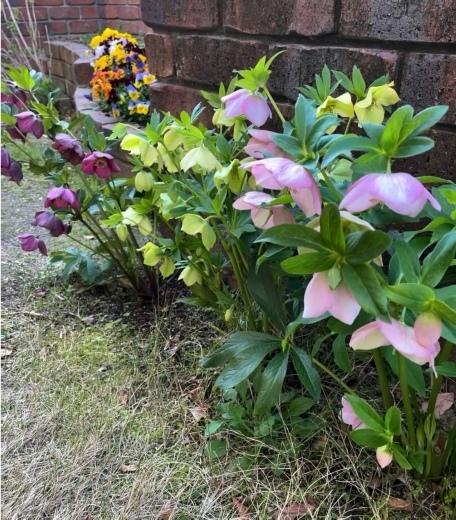 春爛漫のお庭*⃝̣◌︎⑅⃝︎◍︎♡︎◌︎*⃝̥◍︎♡︎_a0213806_12303870.jpeg