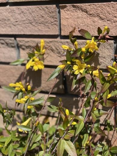 春爛漫のお庭*⃝̣◌︎⑅⃝︎◍︎♡︎◌︎*⃝̥◍︎♡︎_a0213806_12313063.jpeg