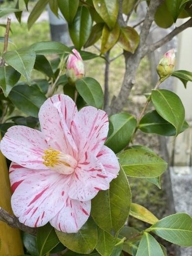 春爛漫のお庭*⃝̣◌︎⑅⃝︎◍︎♡︎◌︎*⃝̥◍︎♡︎_a0213806_12321402.jpeg