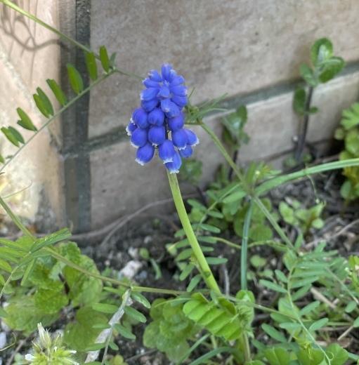 春爛漫のお庭*⃝̣◌︎⑅⃝︎◍︎♡︎◌︎*⃝̥◍︎♡︎_a0213806_12322514.jpeg