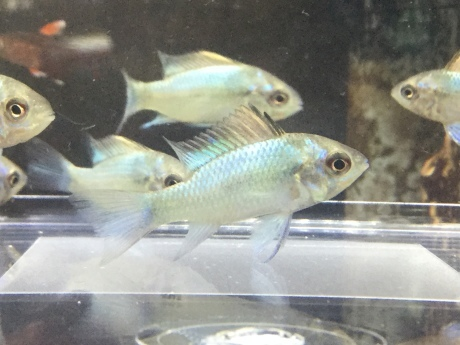 210325 熱帯魚 めだか 水草_f0189122_12262181.jpeg