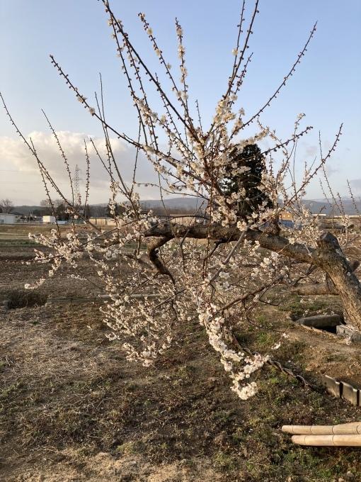 春ですね❣️_a0144626_18434384.jpeg
