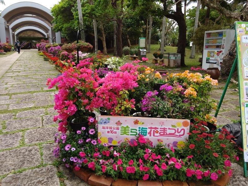 熱帯ドリームセンター 前編  ☆沖縄の旅⑬☆_e0305834_23481758.jpg