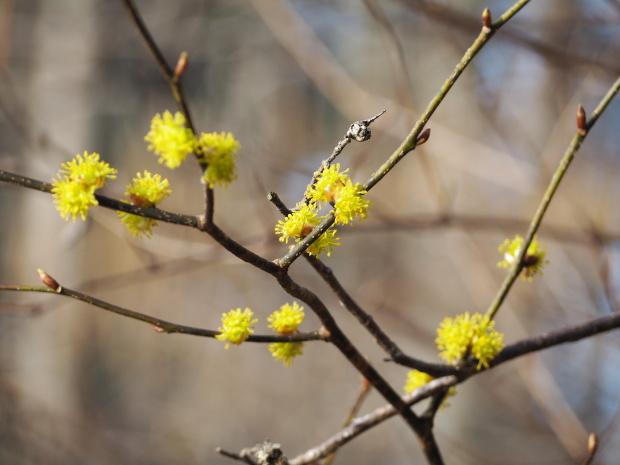 森に早春を告げる 小さな黄色い花たち_d0360272_21271544.jpg