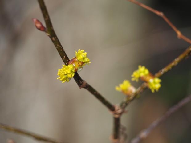 森に早春を告げる 小さな黄色い花たち_d0360272_21282188.jpg