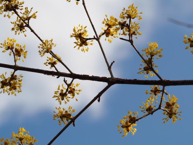 森に早春を告げる 小さな黄色い花たち_d0360272_21312653.jpg
