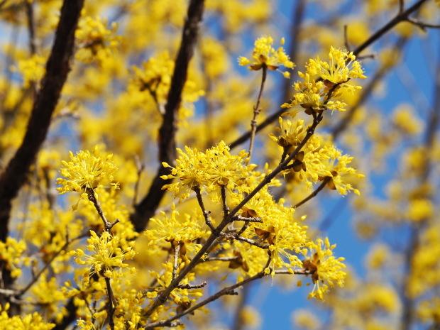 森に早春を告げる 小さな黄色い花たち_d0360272_21313445.jpg