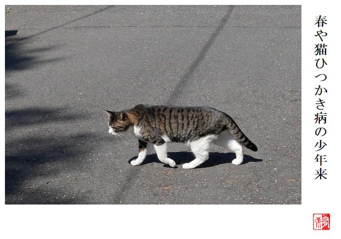 春や猫ひつかき病の少年来_a0248481_21252497.jpg